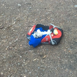 Our dog Mr Stuffy enjoyed a nap in his motorcycle bed