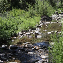 the creek (Nacimiento River)