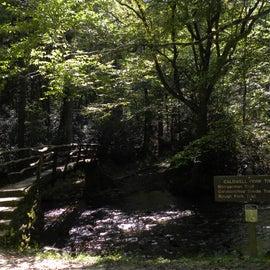 Bridge that Leads to Boogerman Trail