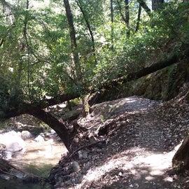 Along Uvas Creek Trail