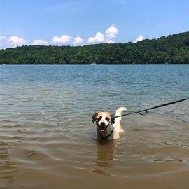 access to the lake - dog friendly