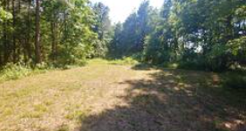 Vienna Maryland Wooded Campsite