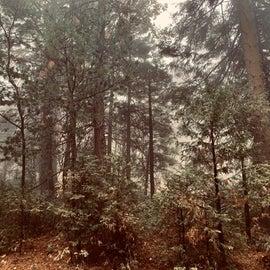 Morning fog and rain
