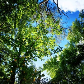 tree canopies everywhere!