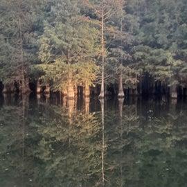 last light on dark forest