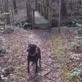 Byrd hiking trail near campground