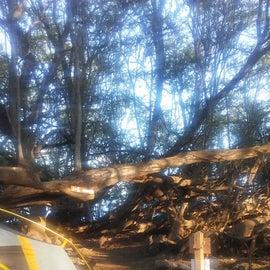 A cozy campsite at Camp Olowalu