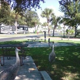 Cranes visiting the campsite
