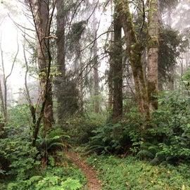 Trails between the campsites