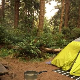 Primus Classic Trail stove in the California Redwoods.