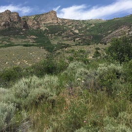 Lamoille canyon in July.