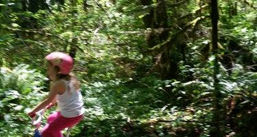 Wynoochee Falls Campground