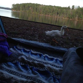 Lakefront camping with a visitor.