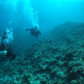 love the underwater life