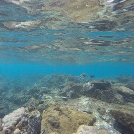 Snorkel Life