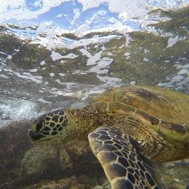 Hey turtle!