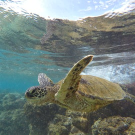 Love swimming with turtles