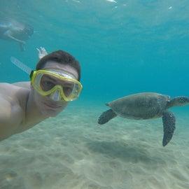 Hello turtle!
